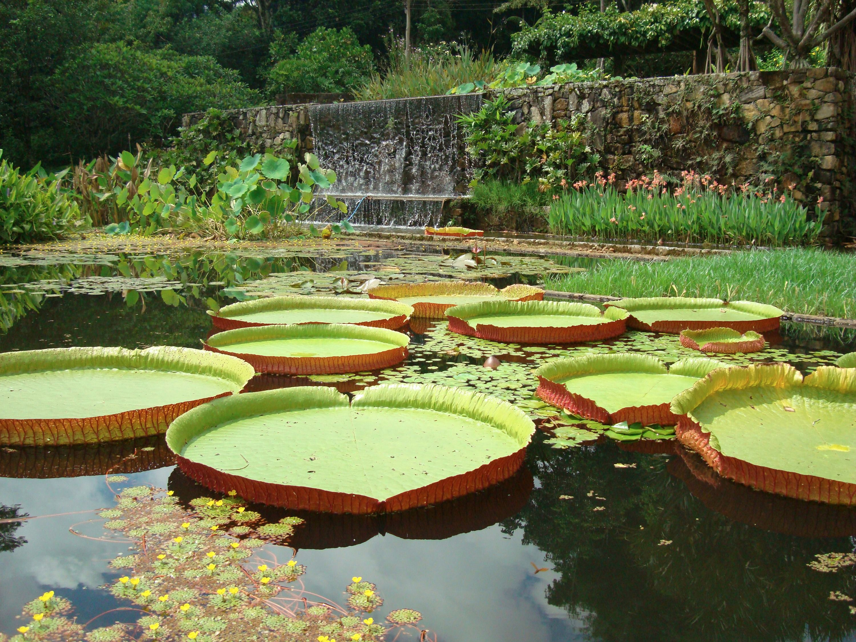 Why Roberto Burle Marx S Art Is Still Too For Museums